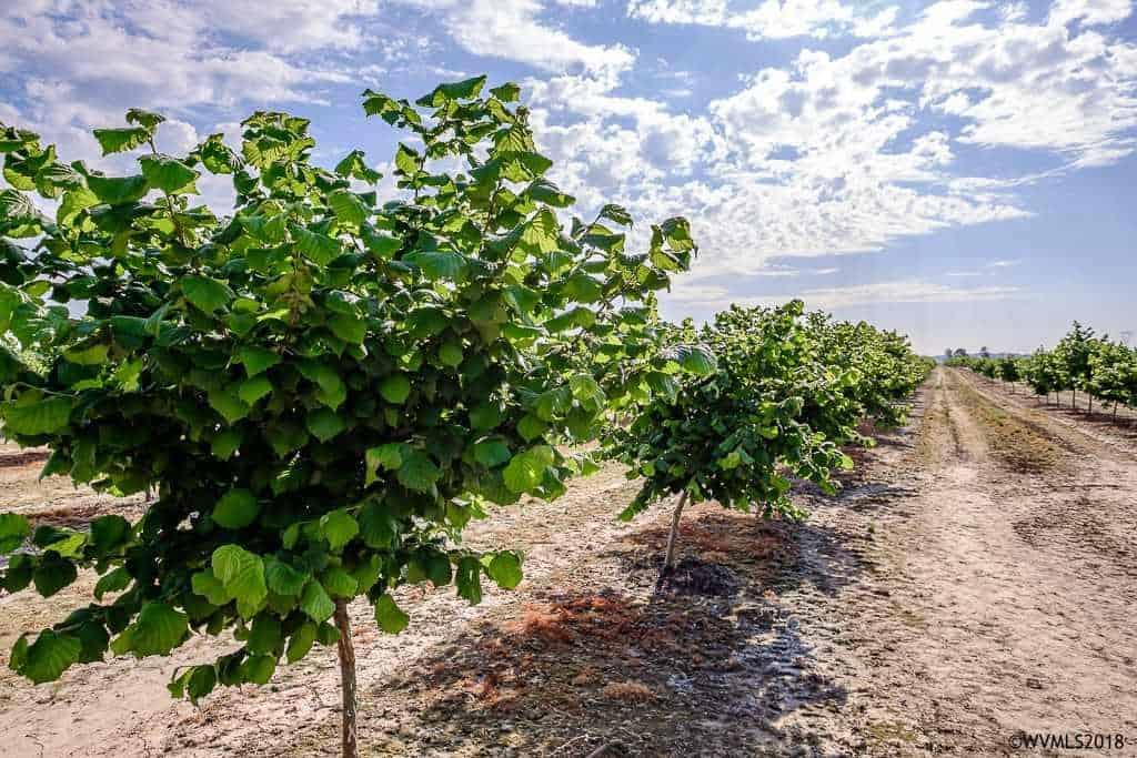80 Acre Hazelnut Farm