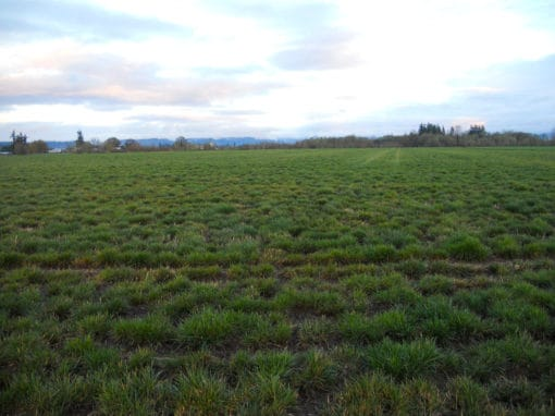 Crabtree Farm | Farmland in Oregon