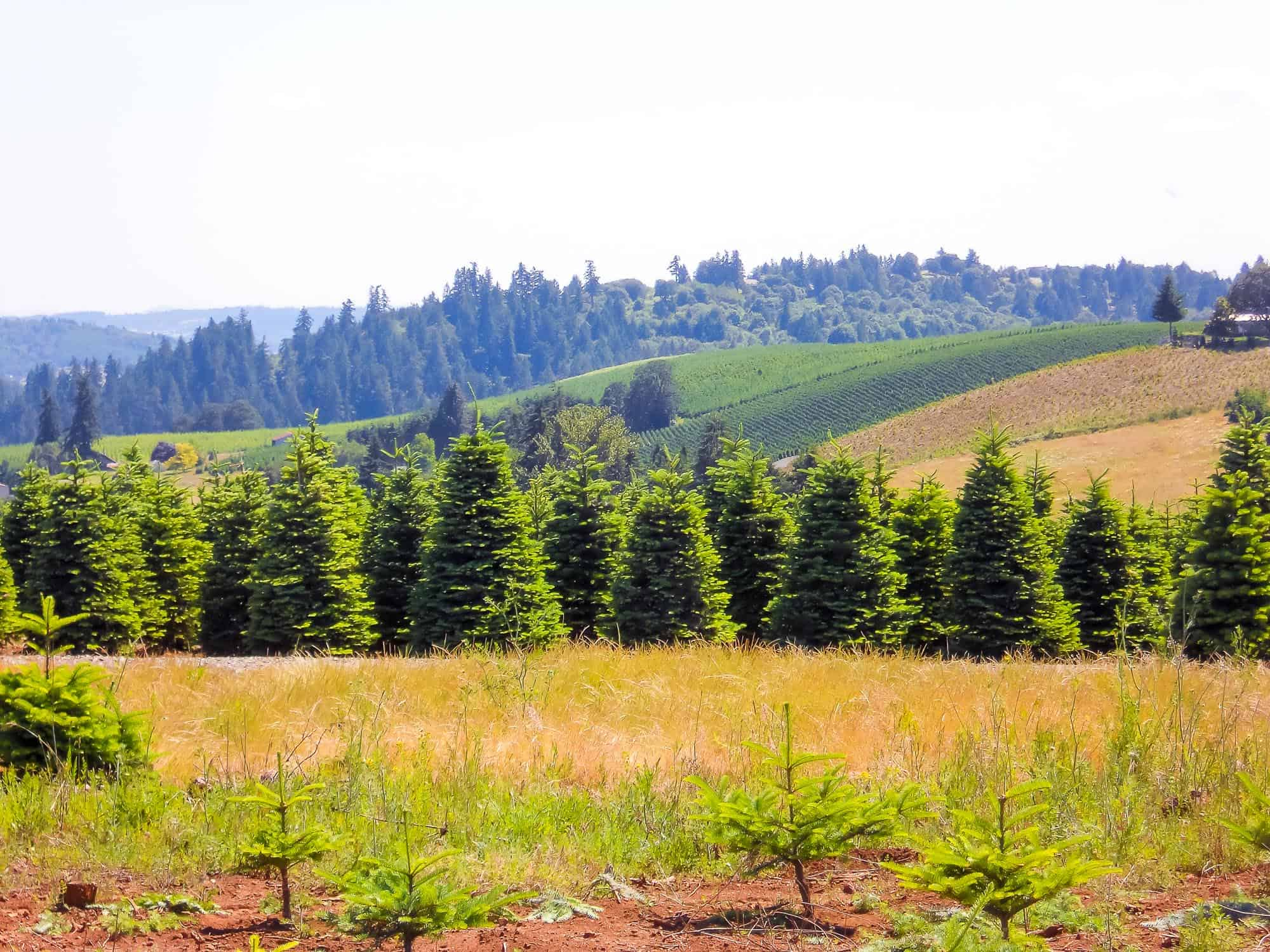 Christmas Tree Farm Property For Sale In Oregon