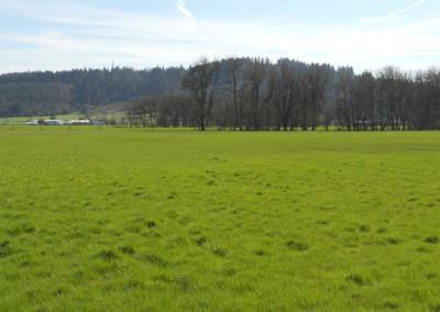 Scio Farm land for Sale-16