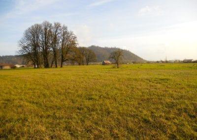 Willamette Valley Farmland in Oregon-9